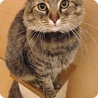 Adopt A Pet :: Jimmy - brewerton, NY
