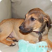 Adopt A Pet :: Luke - Hagerstown, MD
