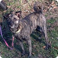 Adopt A Pet :: Timmy - Texico, IL