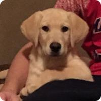Adopt A Pet :: Boomer - Freeport, NY
