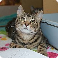 Adopt A Pet :: Riptide - Rochester, MN