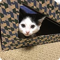 Adopt A Pet :: Lifesaver 1 - Austin, TX