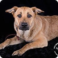Adopt A Pet :: Luna - Lodi, CA