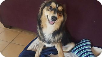 Collie Mix Dog for adoption in Caledon, Ontario - Keeper