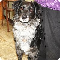 Adopt A Pet :: Tanner #2 - Sparta, NJ