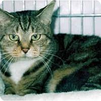 Adopt A Pet :: Zoe - Medway, MA