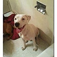 Adopt A Pet :: Taz aka Cricses - Geismar, LA