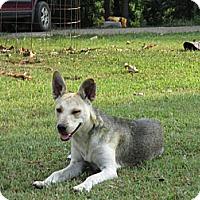 Adopt A Pet :: Trixie - Conway, AR