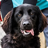 Adopt A Pet :: Beauty - New Canaan, CT