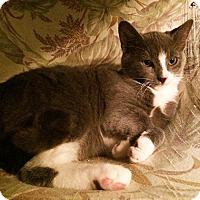 Adopt A Pet :: Smokie - Metairie, LA