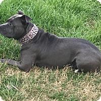 Adopt A Pet :: Dolores - Von Ormy, TX