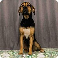 Adopt A Pet :: *CORALINE - Sugar Land, TX