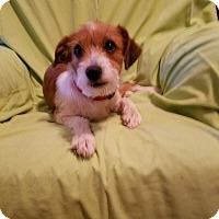 Adopt A Pet :: Angel (has been adopted) - Trenton, NJ