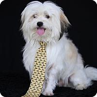 Adopt A Pet :: Puck - SAN PEDRO, CA