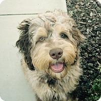 Adopt A Pet :: Finn - Santa Barbara, CA