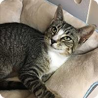 Adopt A Pet :: Bindee - Richmond, VA