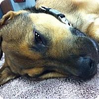 Adopt A Pet :: Trooper - Dallas, GA