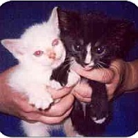 Adopt A Pet :: Monrow & Munson - Clementon, NJ