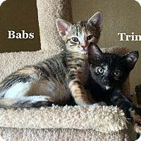 Adopt A Pet :: Babs - Bentonville, AR