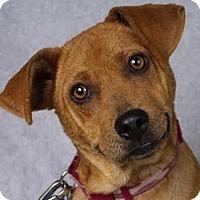 Adopt A Pet :: Arlie - Minneapolis, MN