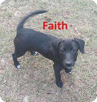 Labrador Retriever/Hound (Unknown Type) Mix Puppy for adoption in Augusta, Maine - Faith