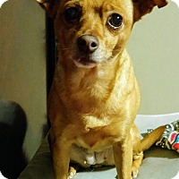Adopt A Pet :: Twinkles - Fowler, CA