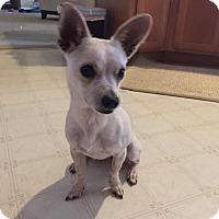 Adopt A Pet :: Kauai - Sacramento, CA