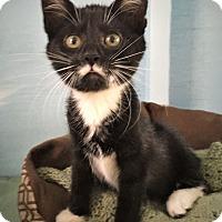 Adopt A Pet :: Connie - Savannah, GA