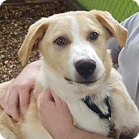 Adopt A Pet :: Aspen - Austin, TX