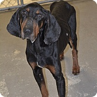 Adopt A Pet :: Hank - Greensburg, PA