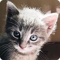 Adopt A Pet :: River - New York, NY