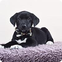 Adopt A Pet :: Orion - Houston, TX