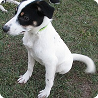 Adopt A Pet :: Gordon - Jacksonville, FL