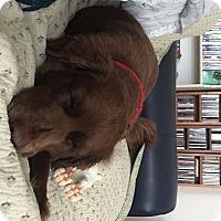 Adopt A Pet :: Larkspur - Evergreen, CO