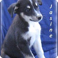 Adopt A Pet :: Jasmine - Marlborough, MA