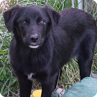 Adopt A Pet :: Milo- ADOPTED - Somerset, KY