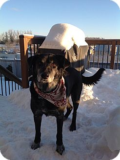 Labrador Retriever Mix Dog for adoption in Cambridge, Ontario - Declan - URGENT
