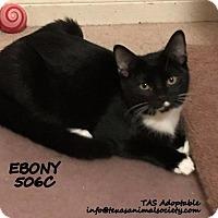 Adopt A Pet :: Ebony - Spring, TX
