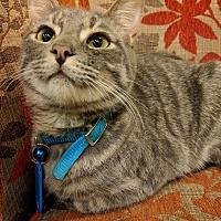 Adopt A Pet :: Dimitry - The Colony, TX