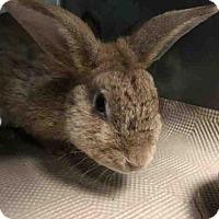 Adopt A Pet :: CHARLOTTE - Brooklyn, NY