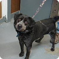 Adopt A Pet :: Stormy - Aurora, IL