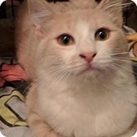 Adopt A Pet :: Percival - Glendale, AZ