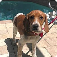 Adopt A Pet :: Kobi - Tampa, FL