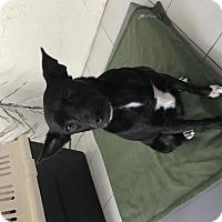 Adopt A Pet :: Lana - New Port Richey, FL