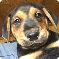 Adopt A Pet :: Baby Boy - Brooklyn, NY