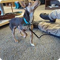 Adopt A Pet :: Coco - Ogden, UT