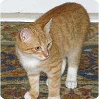 Adopt A Pet :: Dexter - Barnegat, NJ