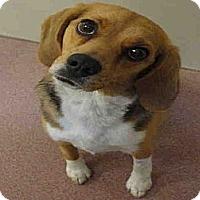 Adopt A Pet :: Rosie - Ogden, UT