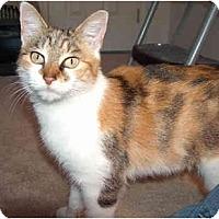 Adopt A Pet :: Gigi - Greenville, SC