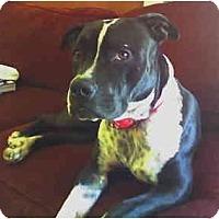 Adopt A Pet :: Zena - Scottsdale, AZ